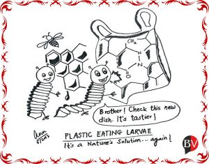 Nature's cure: a plastic eating larvae! (By Dr Anju D Vaish)