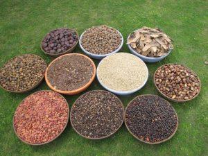 Western ghats biodiversity