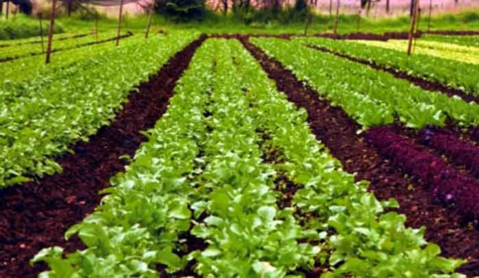 organic vs conventional growing methods