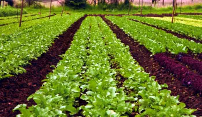 Image result for organic farming