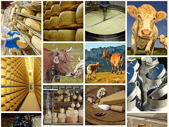 CLFMA represents the Indian livestock industry at The Feed